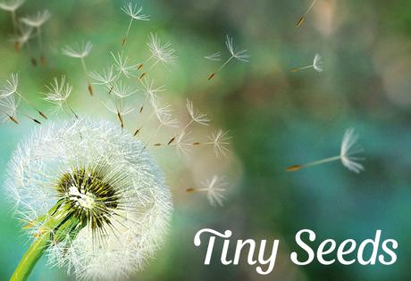 Tiny Seeds - Gewohnheiten nachhaltig etablieren.